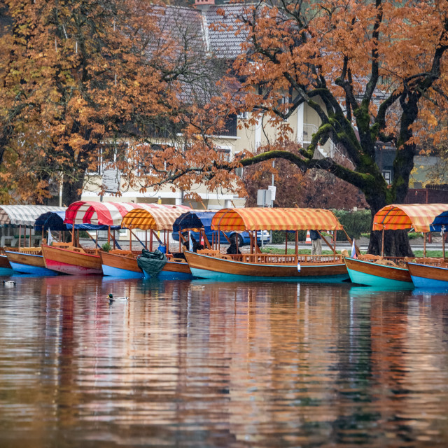 """Pletna Boats on Lake Bled Slovenia"" stock image"