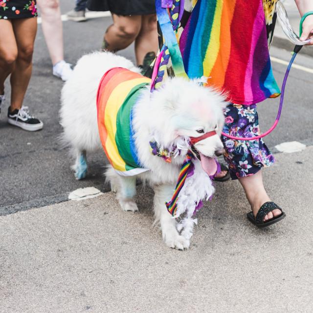 """Pride Dog"" stock image"
