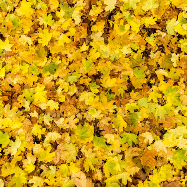 """Autumn leaves on the forest floor"" stock image"