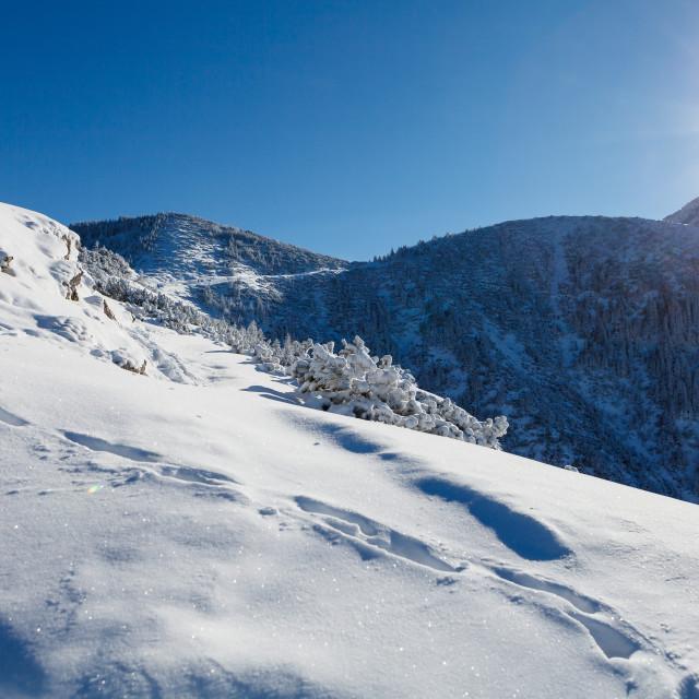 """""""""""Przelecz miedzy Kopami"""" in Tatra mountains, winter time"""" stock image"""