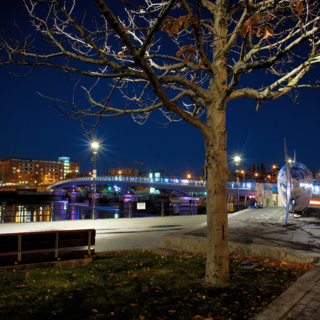 """""""Tree in Donegall Quay"""" stock image"""