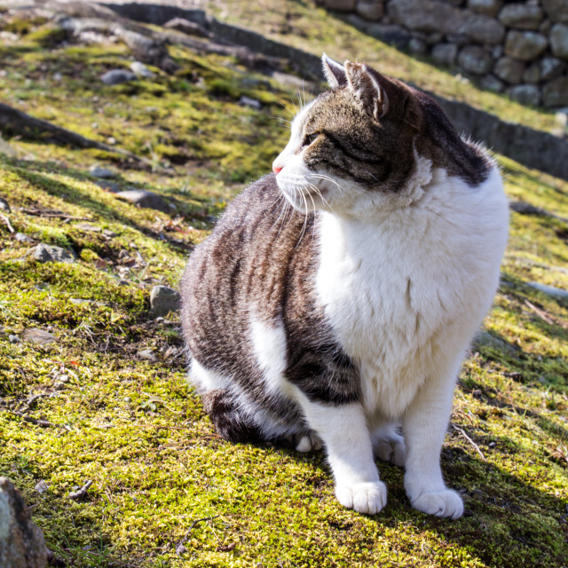 """Adorable cat at Himeji castle garden area in Hyogo prefecture"" stock image"