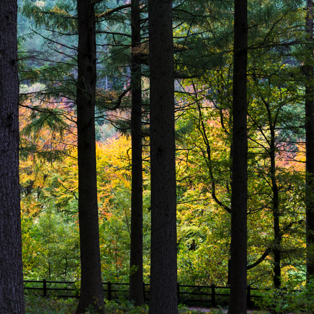 """Changing colours of the trees by the Upper Derwent Reservoir"" stock image"