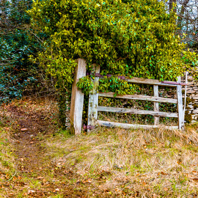 """""""Gate into the woodland"""" stock image"""