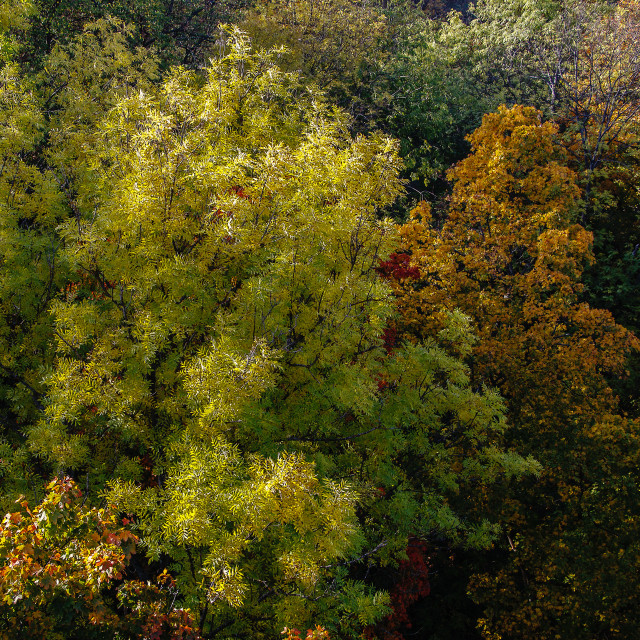 """""""Trees in the autumn"""" stock image"""