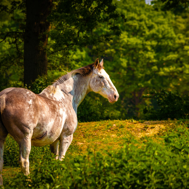 """""""Magnificent horse in its field"""" stock image"""