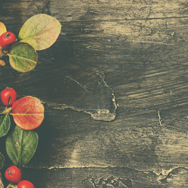 """""""Background with leaves and berries"""" stock image"""