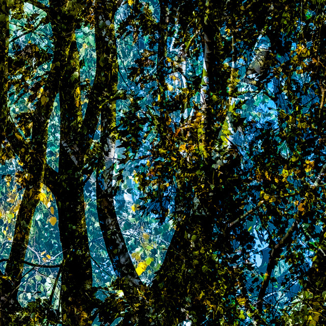 """Tangled woods"" stock image"