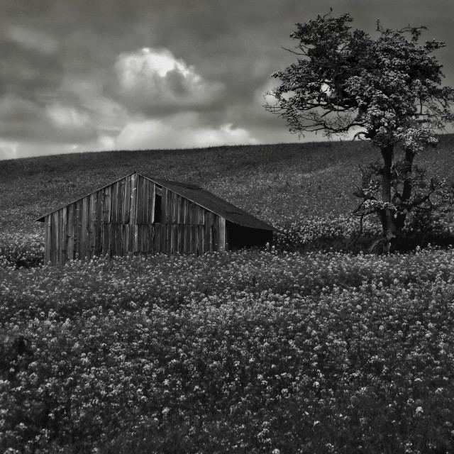 """Barn & Tree"" stock image"