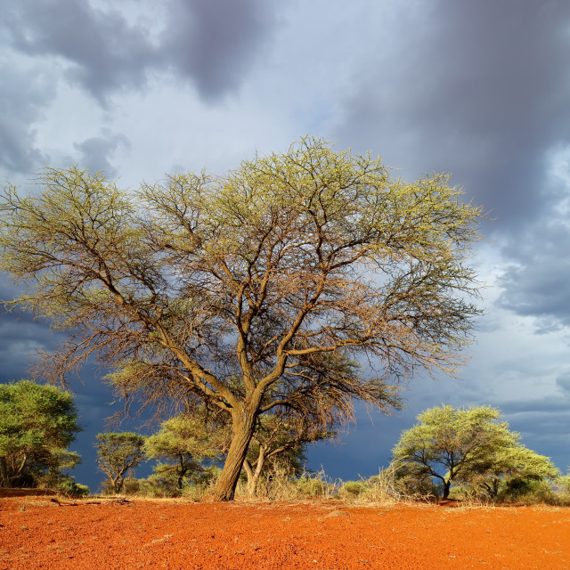 """African landscape against a stormy sky"" stock image"