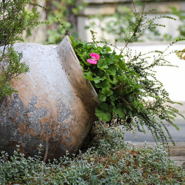 """А clay pot with flowers"" stock image"