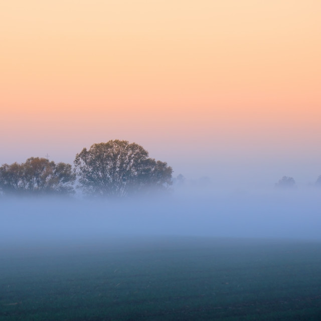 """Autumn fog over the field under the trees"" stock image"