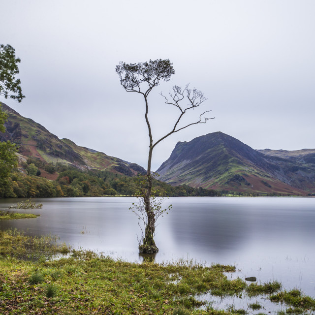 """The Lone Lake Tree."" stock image"