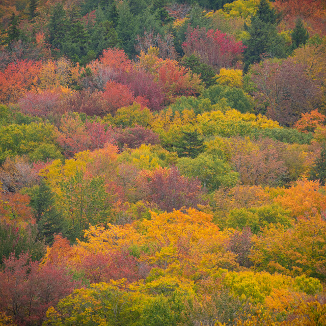 """Fall foliage in New England"" stock image"