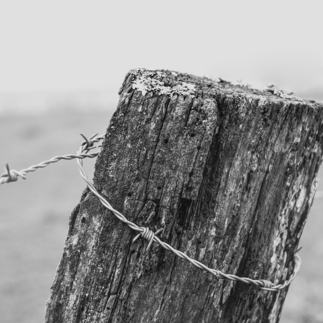 """Barbed wire on a wooden post"" stock image"