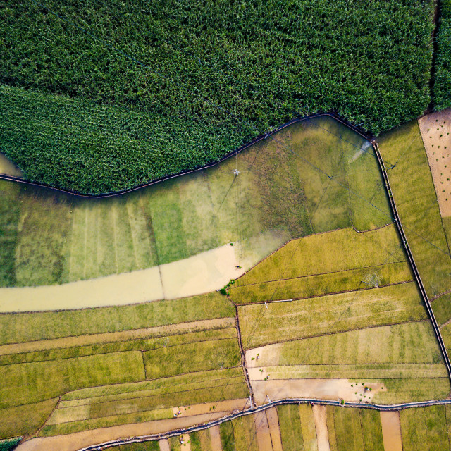 """Rice and sugar cane fields in Southern China aerial"" stock image"