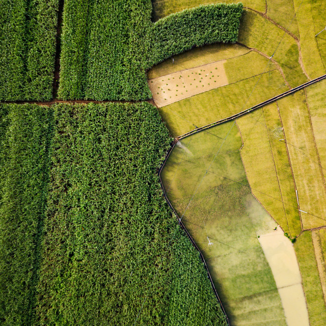 """Rice and sugar cane fields divided by road aerial view"" stock image"