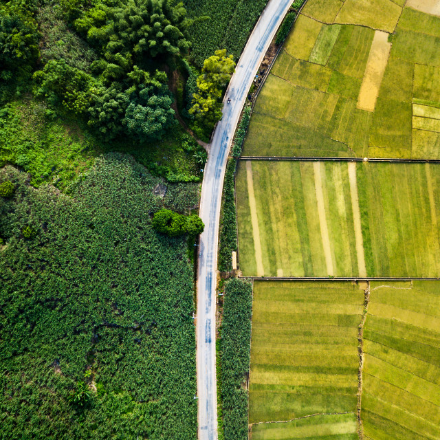 """""""Rice and sugar cane fields divided by road aerial view"""" stock image"""