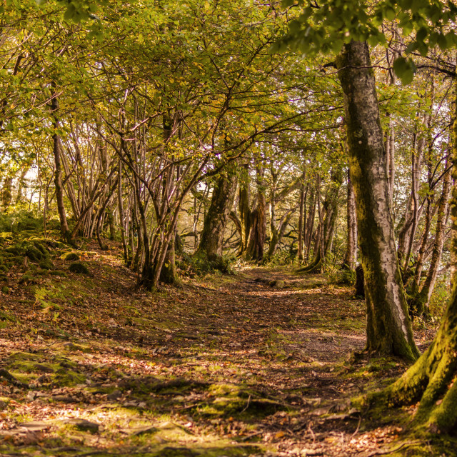 """""""The Autumn Colours of Inchmahome"""" stock image"""