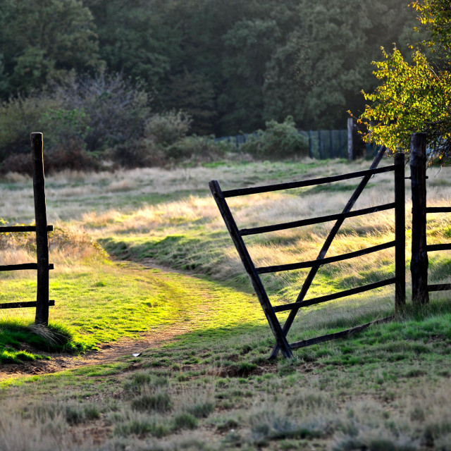 """Gate on the grazing light"" stock image"