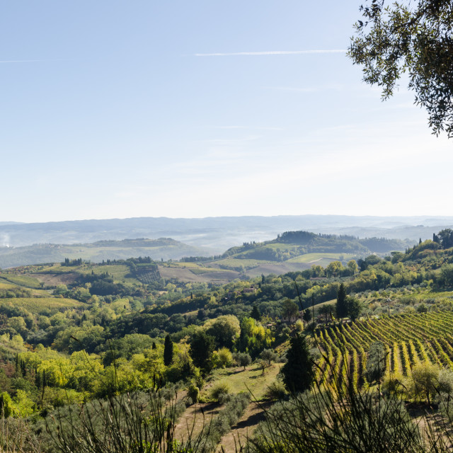 """Green Tuscany landscape view"" stock image"