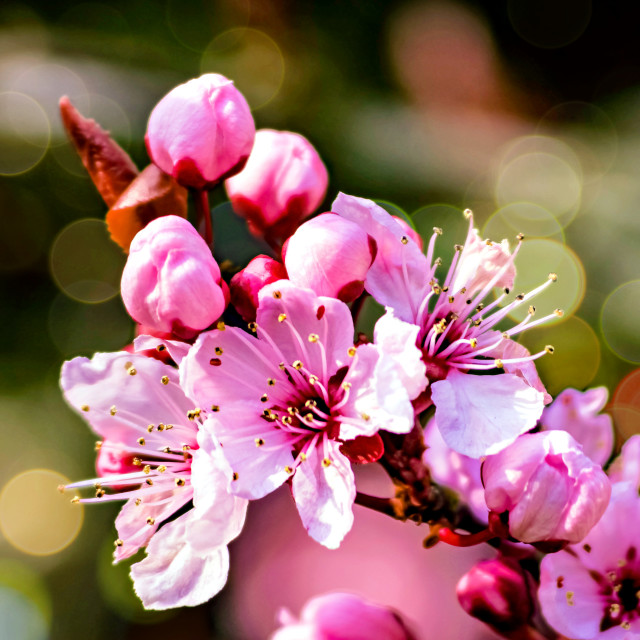 """A sign of Spring"" stock image"