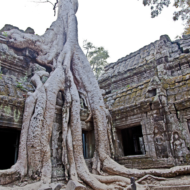 """Ta Prohm"" stock image"
