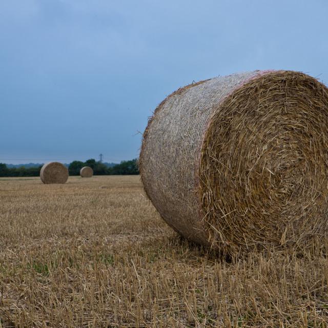 """hayfield"" stock image"