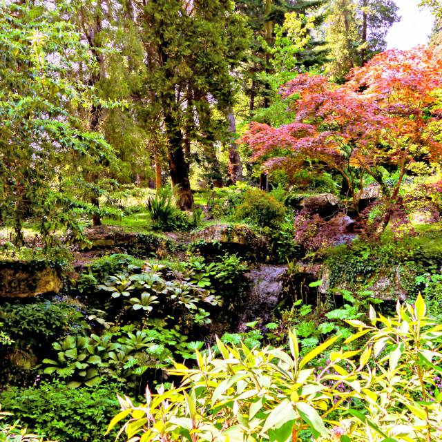 """""""Arboretum"""" stock image"""