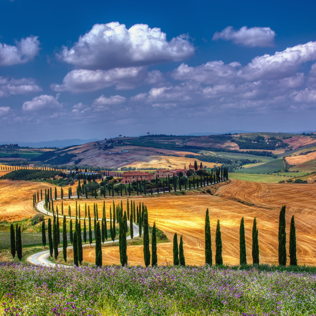 """Cypress trees and meadow with typical tuscan house."" stock image"
