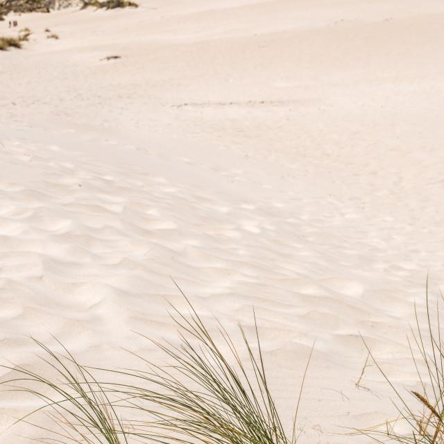 """""""Golden dune"""" stock image"""