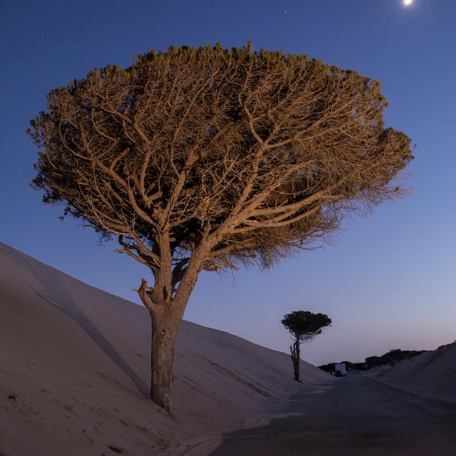 """Tree at night"" stock image"