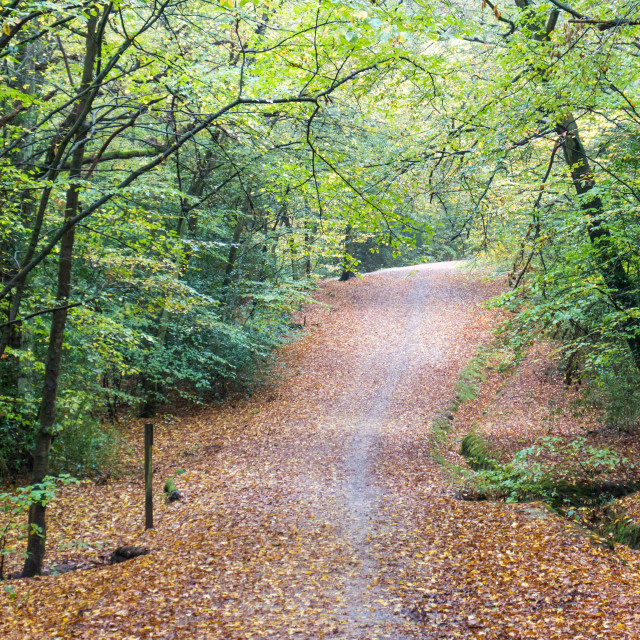 """""""Epping Forest"""" stock image"""