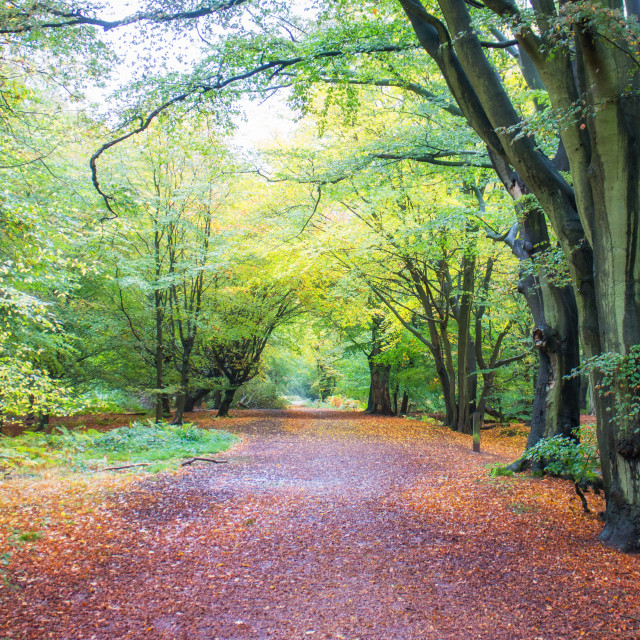 """""""Track in Epping Forest"""" stock image"""
