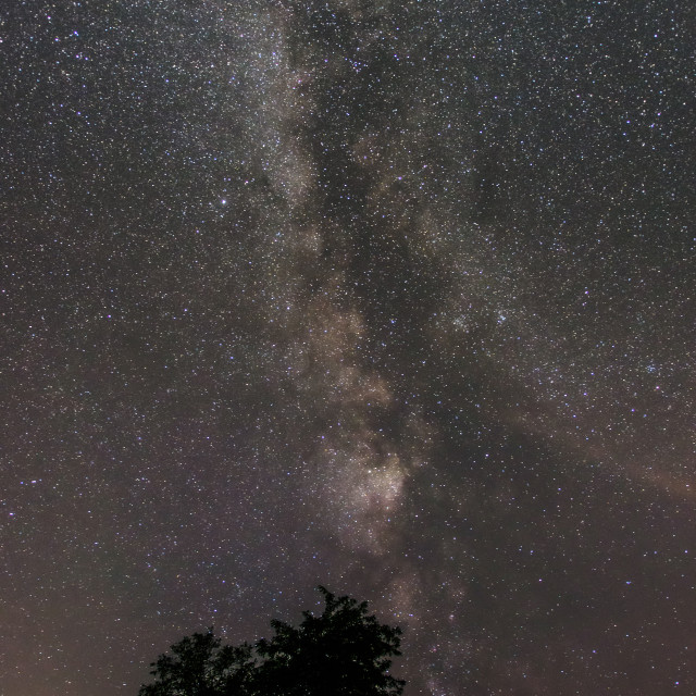 """Beautiful starry band of the Milky Way galaxy seemingly growing over a tree silhouette"" stock image"