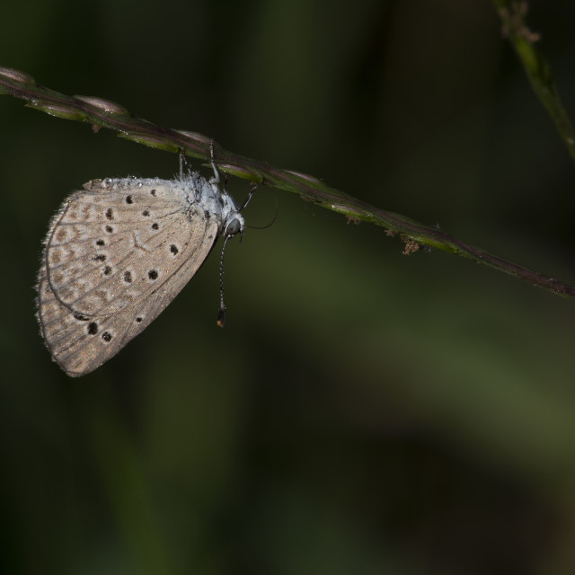 """Pale grass blue"" stock image"