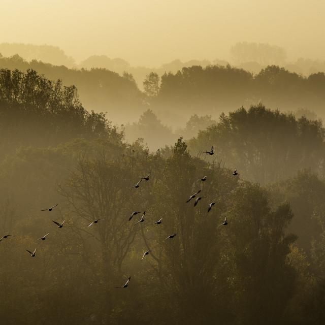 """""""Birds at sunrise"""" stock image"""