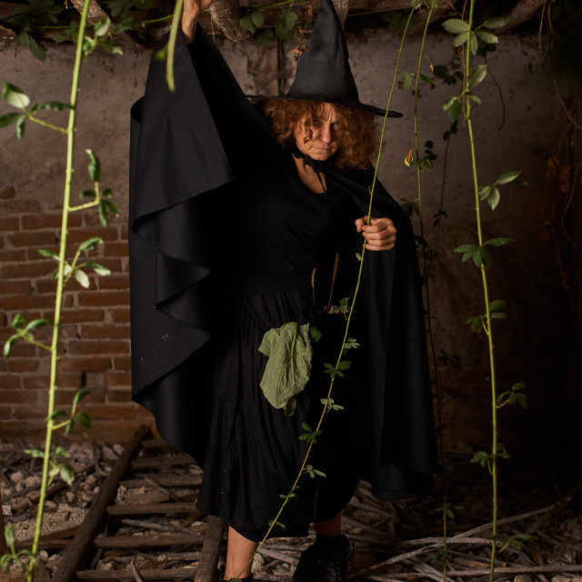 """""""Old scary witch"""" stock image"""