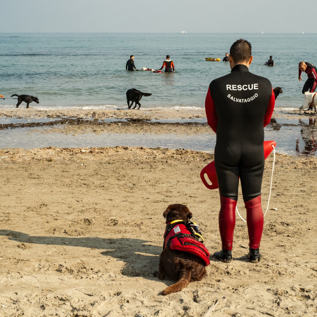 """Rescue dogs training"" stock image"