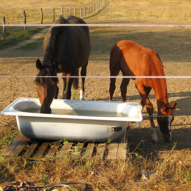 """""""Horses I"""" stock image"""
