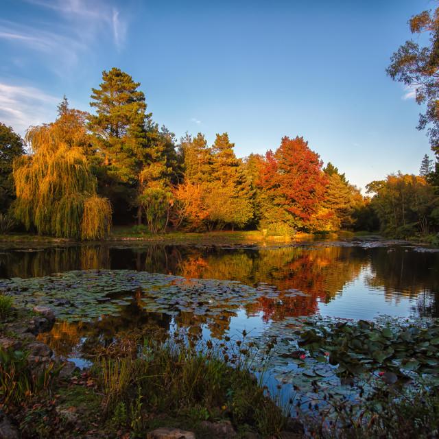 """Autumn Colours Thorpe Le Soken"" stock image"