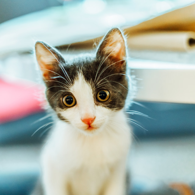 """""""Cute Baby Cat Portrait At Home"""" stock image"""