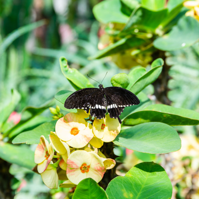"""""""Interesting butterfly perched on plant with yellow blooms"""" stock image"""