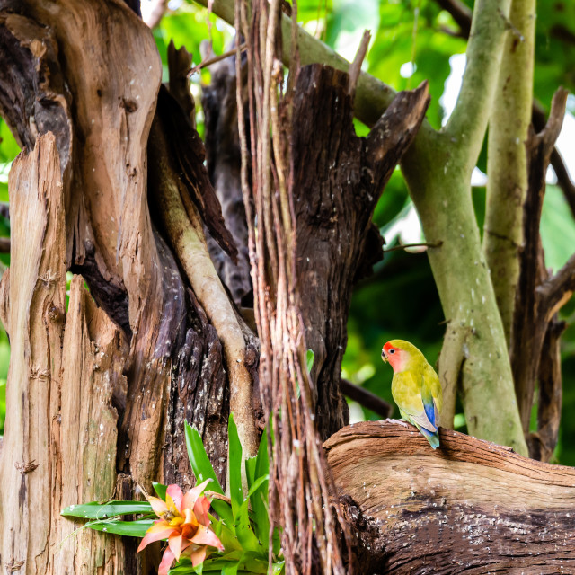 """""""Nice colorful parrot with green and yellow color perched on worn branch"""" stock image"""