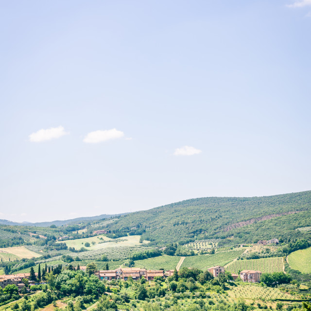 """""""View into tuscany country with hills covered by olive trees and other plants"""" stock image"""