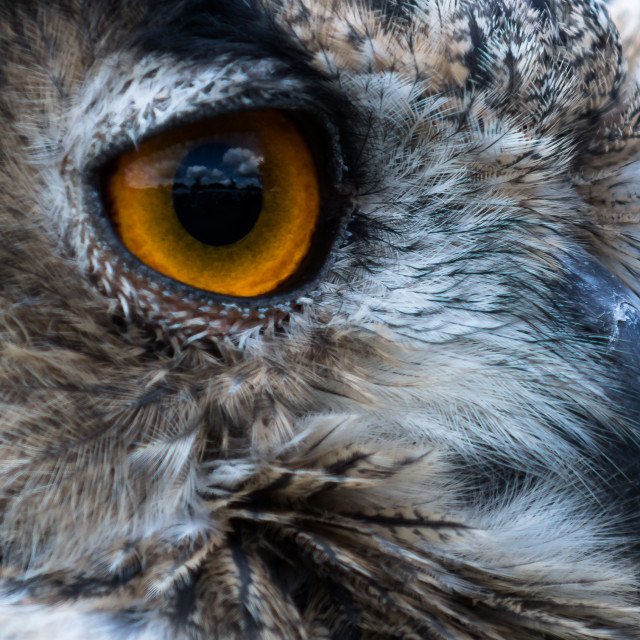 """Owl's Eye"" stock image"