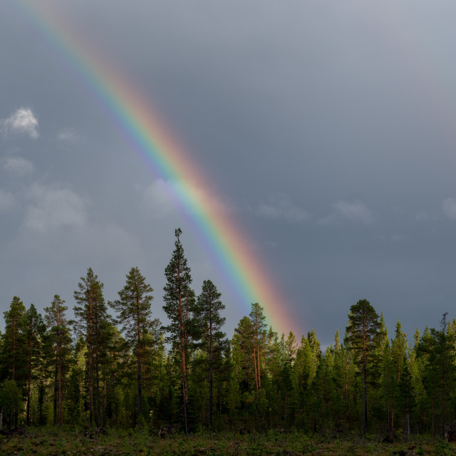 """""""A rainbow in the forest"""" stock image"""