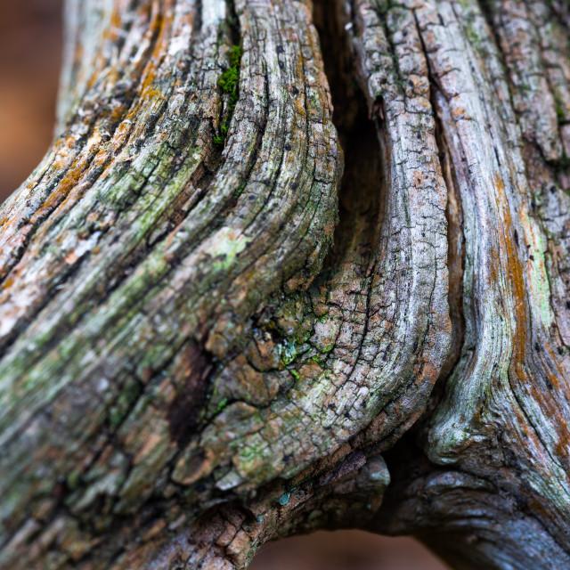 """Tree Branch"" stock image"