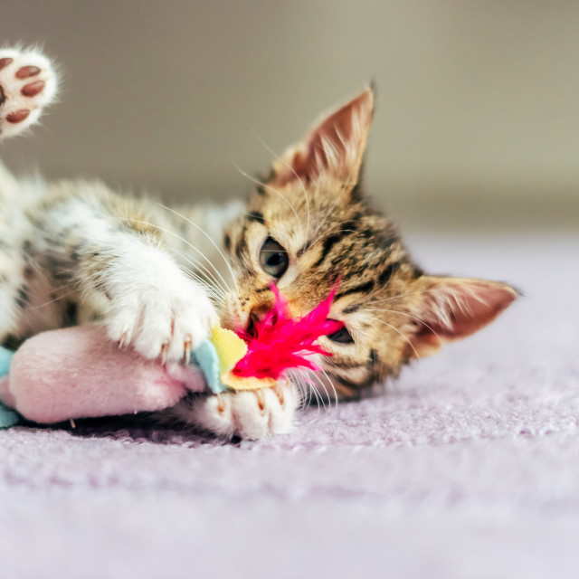"""""""Cute Baby Cat Playing At Home"""" stock image"""