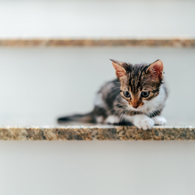 """""""Cute Baby Cat Portrait On Home Stairs"""" stock image"""